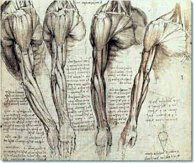 Da Vinci: Muscles of the neck and arm